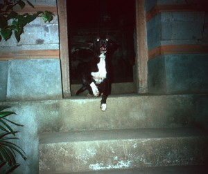 Dog Approaching, Bali '89